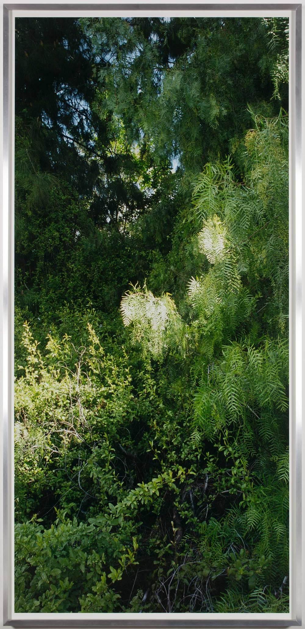 Island Flora #8 (Rte. 101 and Rte. 110 Interchange)    2005   Chromogenic print  99 1/2 x 47 1/2 inches