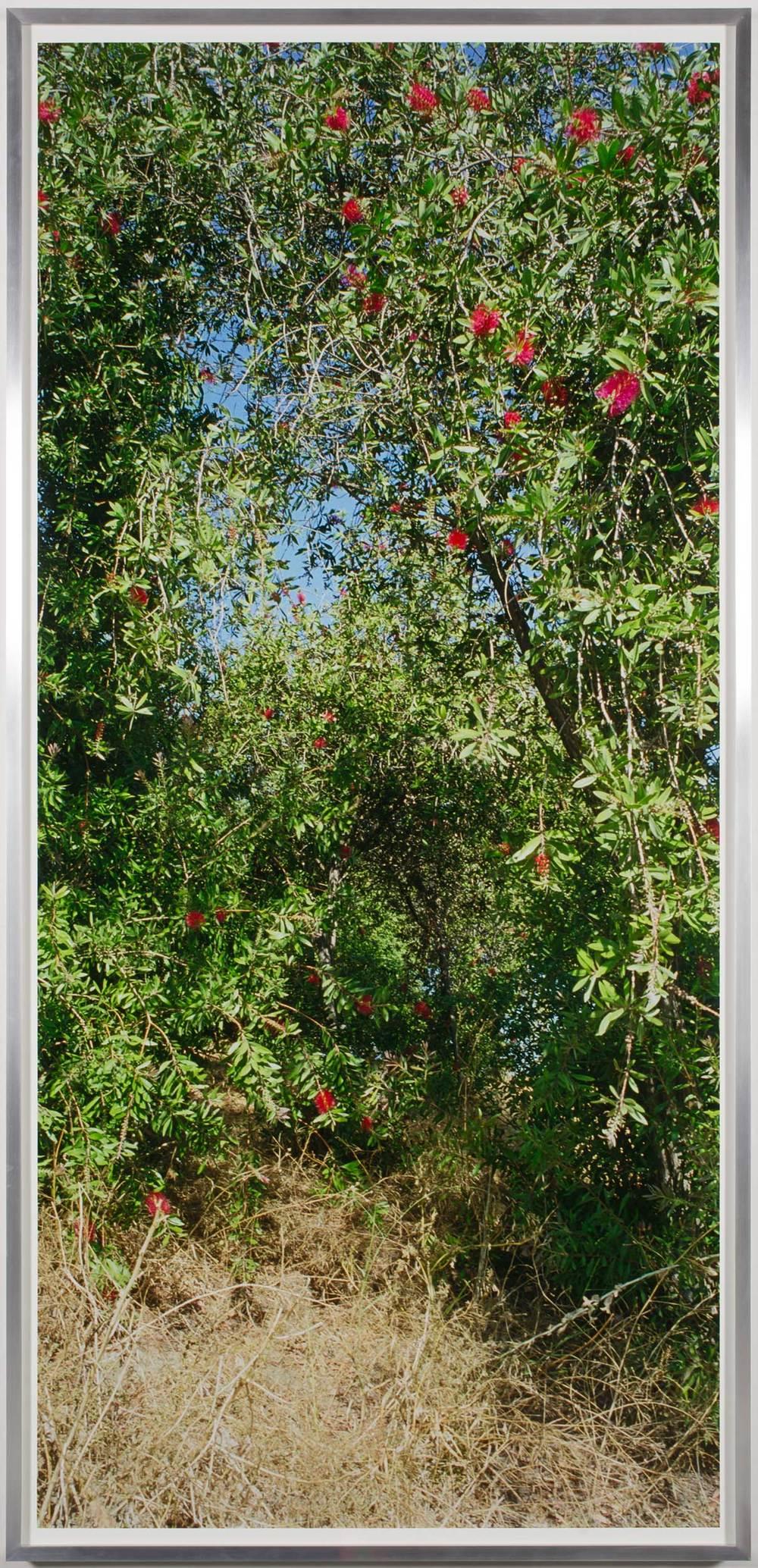 Island Flora #7 (Service Rte. 1)    2005   Chromogenic print  99 1/2 x 47 1/2 inches