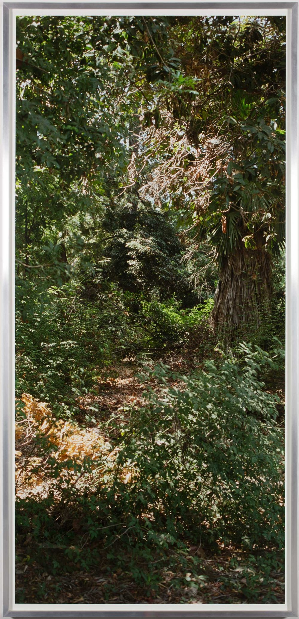 Island Flora #1 (Rte. 5, Southbound)   2005  Chromogenic print  99 1/2 x 47 1/2 inches   Island Flora, 2005