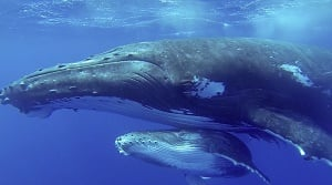 Of Whale and Men - film still