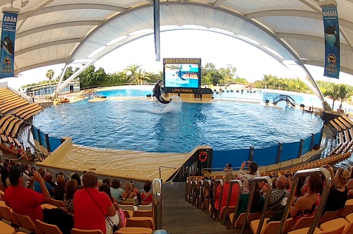 An orca jumps into the air as an audience watches at an outdoor marine show - film still for I Am Morgan: Stolen Freedom