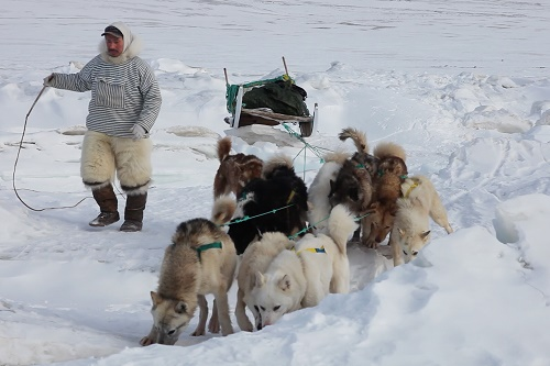 An Inuit man with his dogs and sled - film still for SILA and the Gatekeepers of the Arctic