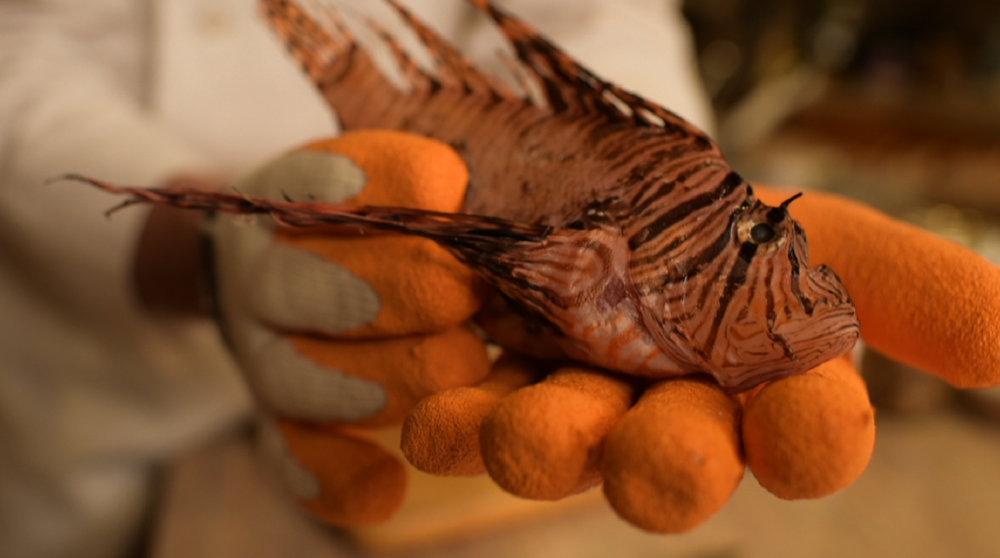 Fish swimming near a plastic bucket - film still for A Plastic Sea