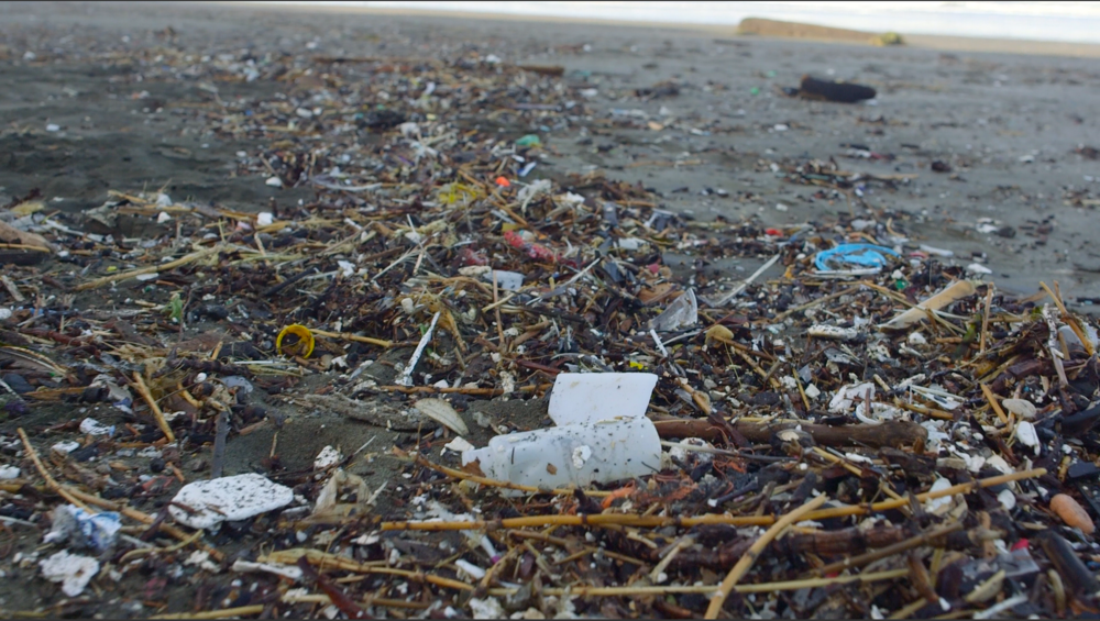 Animated sea lion and fish underwater - film still for A Plastic Sea
