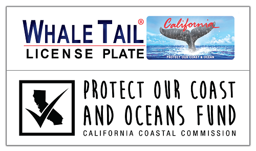 WhaleTail_ProtectOurCoastOceans.png