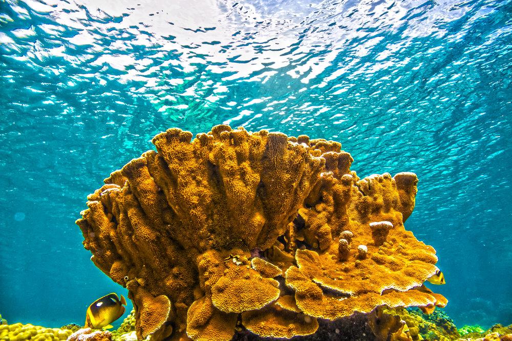 ReefsAtRiskFINALSTILL.jpg