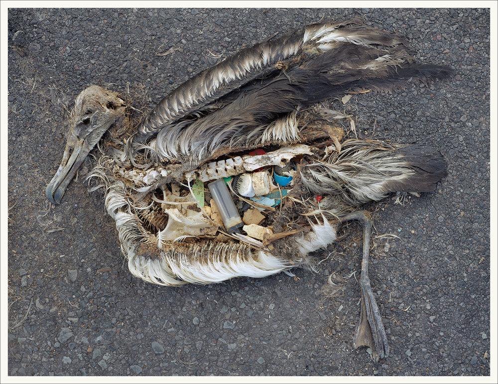 albatross_2.jpg