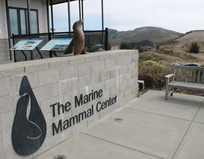 the-marine-mammal-center.jpg