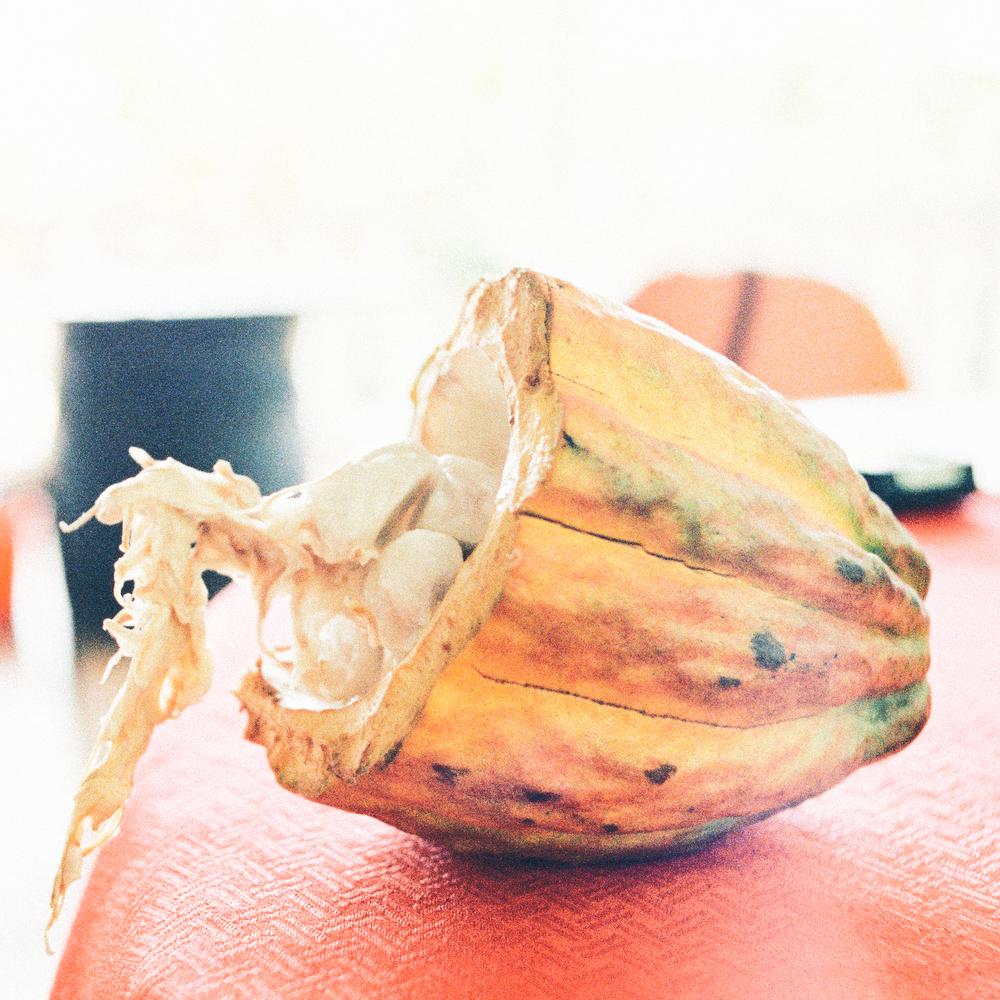 Cocoa--4.jpg