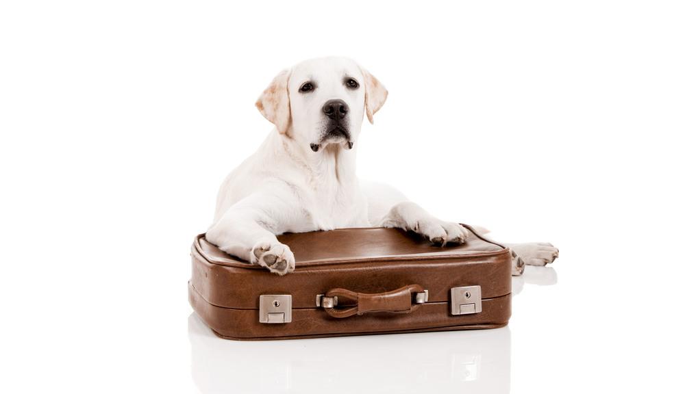 Home-Suitcase.jpg