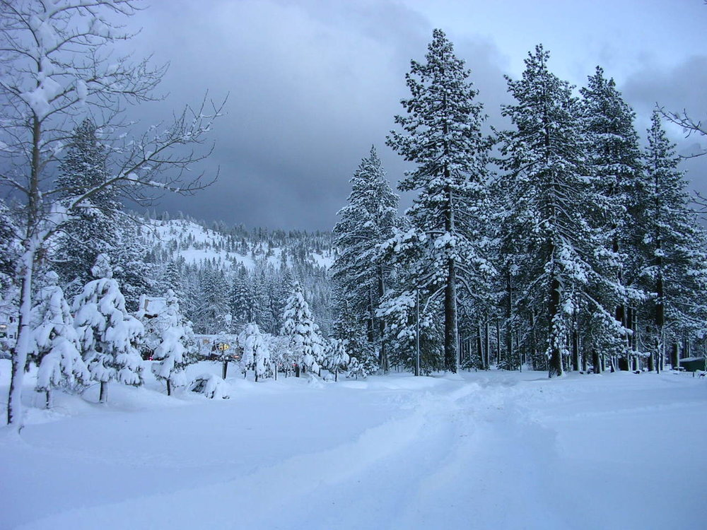 trees-in-the-snow-1524996-1280x960.jpg