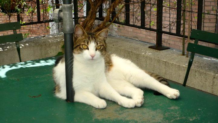 Mon défunt Kiwi, le chat le plus incroyable de la terre. J'espère que sa nouvelle vie est encore mieux que la précédente! (Bien que soyons réalistes, sans moi c'est difficile :p)