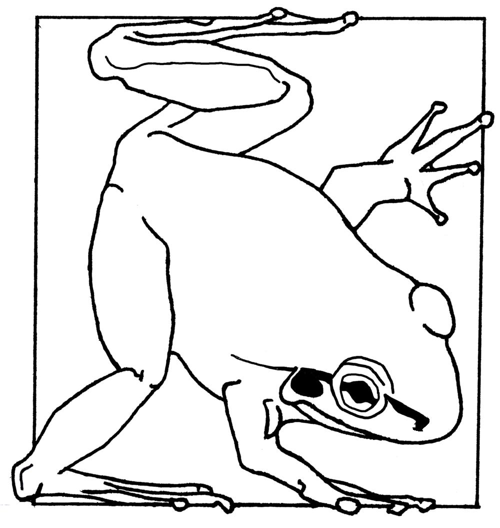 Bell Frog Line Art