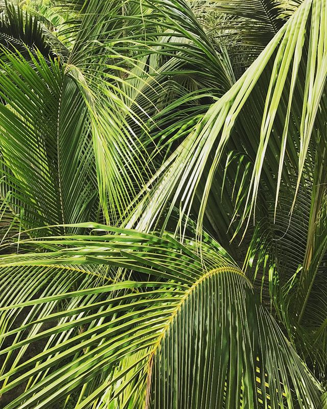 Tropical leaves. Summer inspiration by Fan Optics