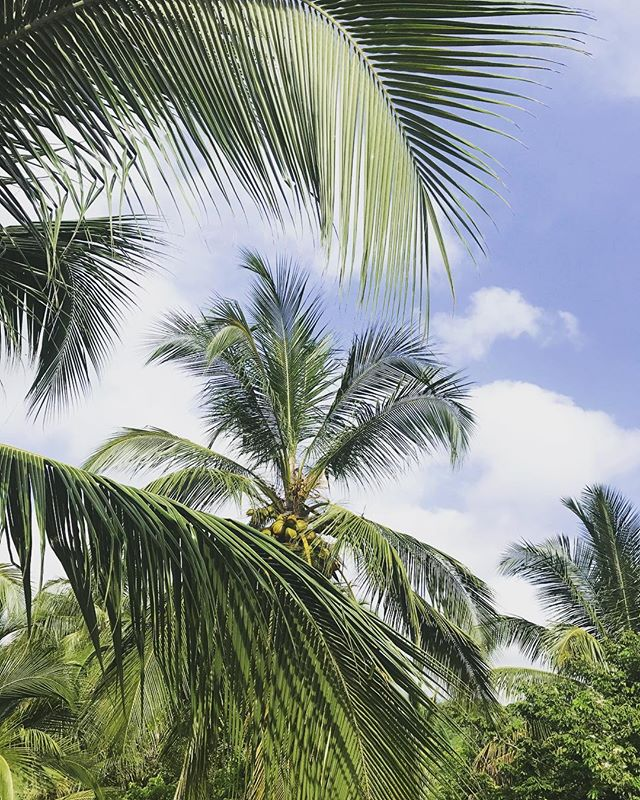 Today's Inspiration : Blue skies and palm trees #colombia