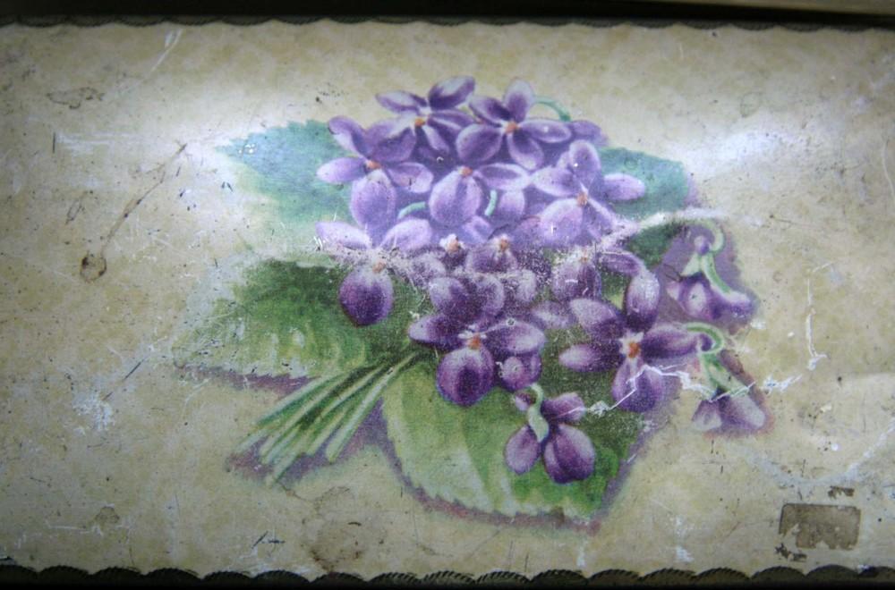 violets3.jpg