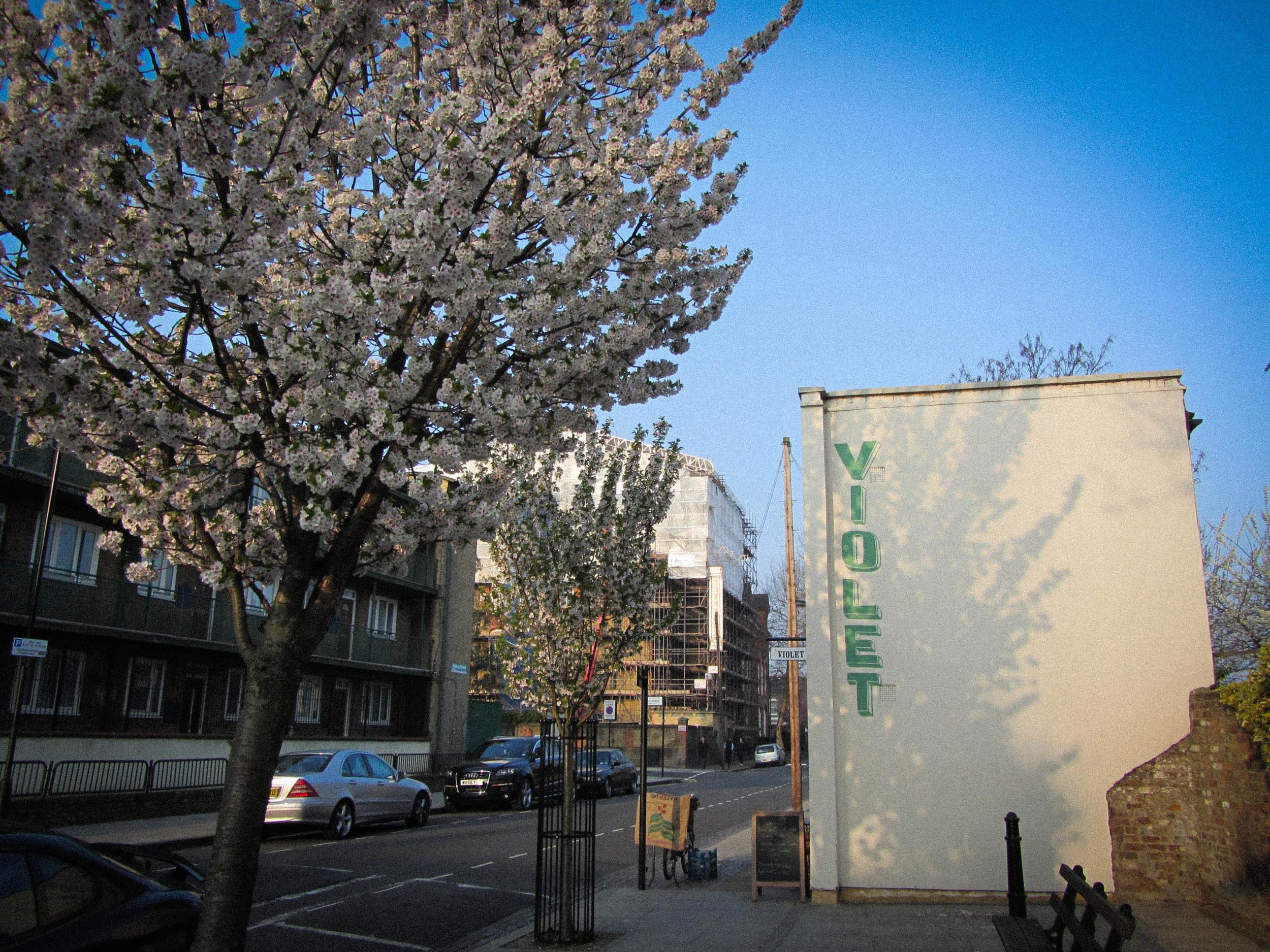 Wilton Way blossom