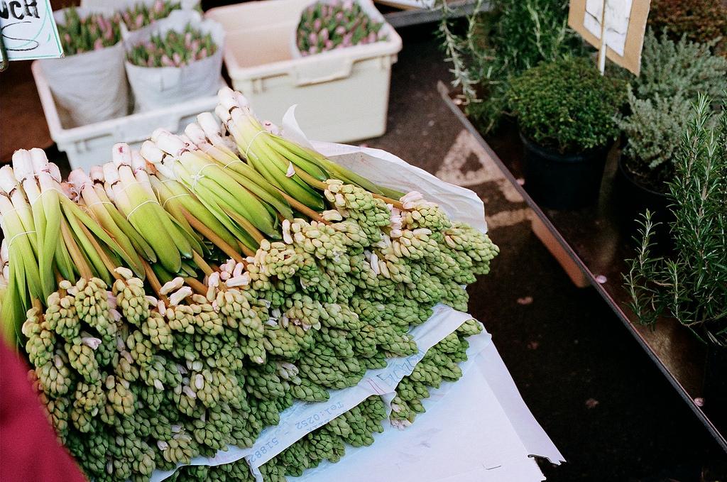 Hyacinths at Columbia Road flower market