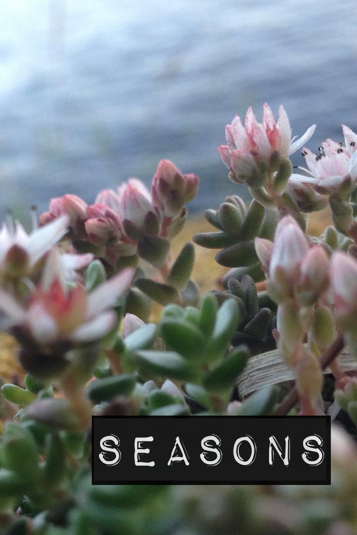 A Wildflowers Home // seasons