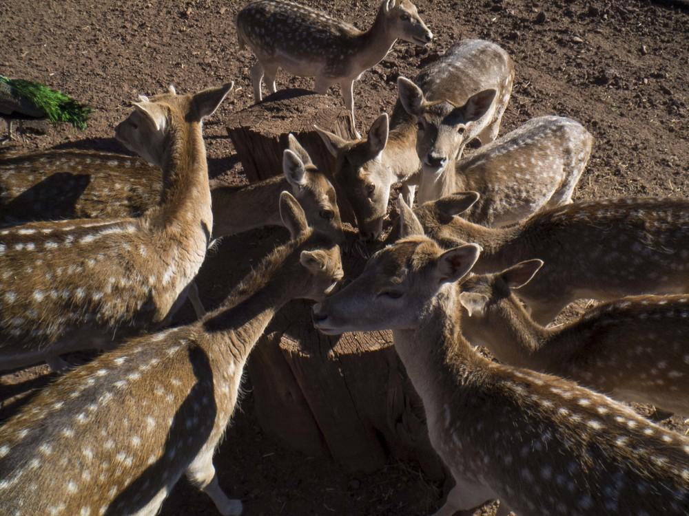 deerworship.jpg