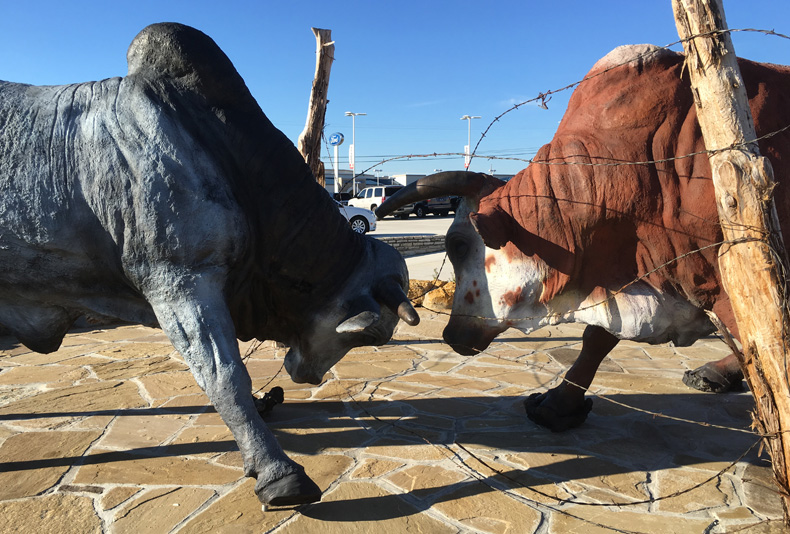 Neighbors | 2016  This pair of life-size bulls was installed at the Jerry Durrant Dealership right outside of Weatherford, Texas.