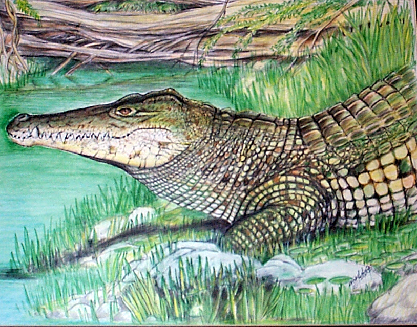 croc-11.jpg