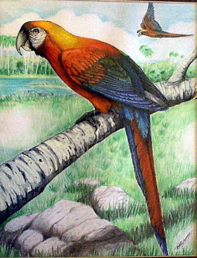 Macaw-2.jpg