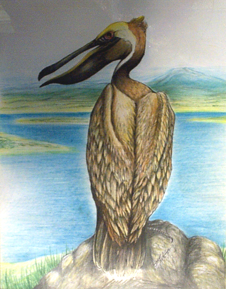 Pelican-7.jpg