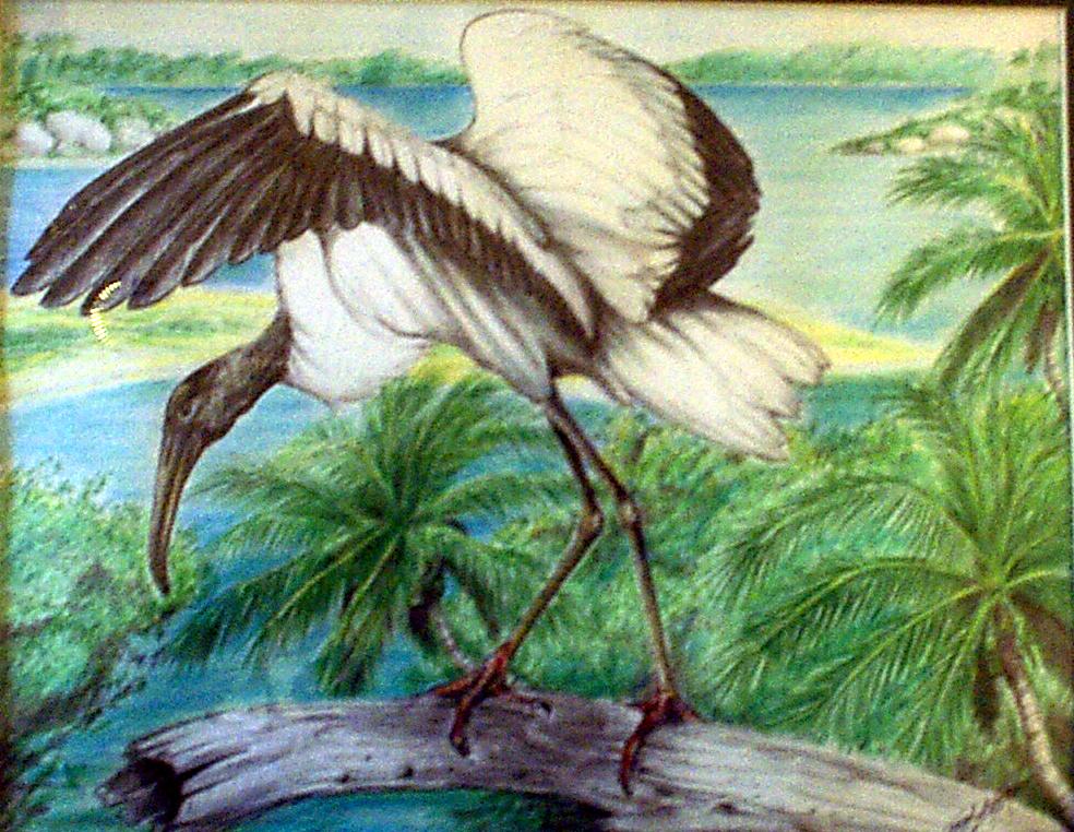 Stork1-4.jpg