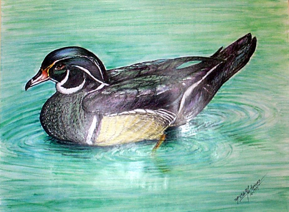 W-Duck-2.jpg