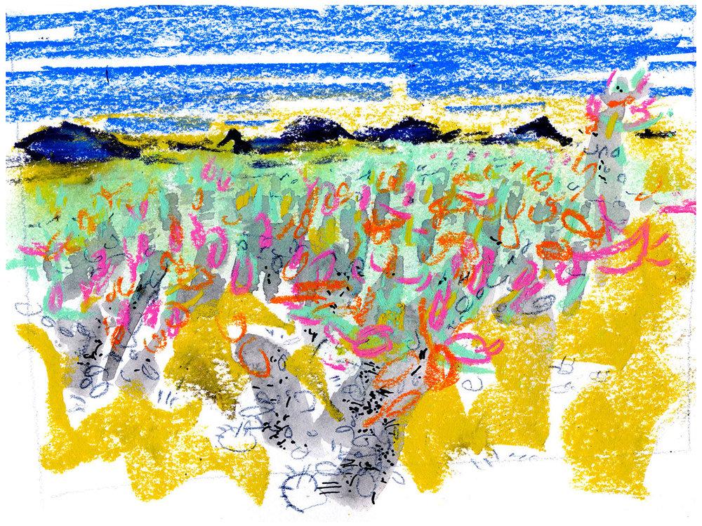 Teddy-bear cacti garden, Joshua Tree