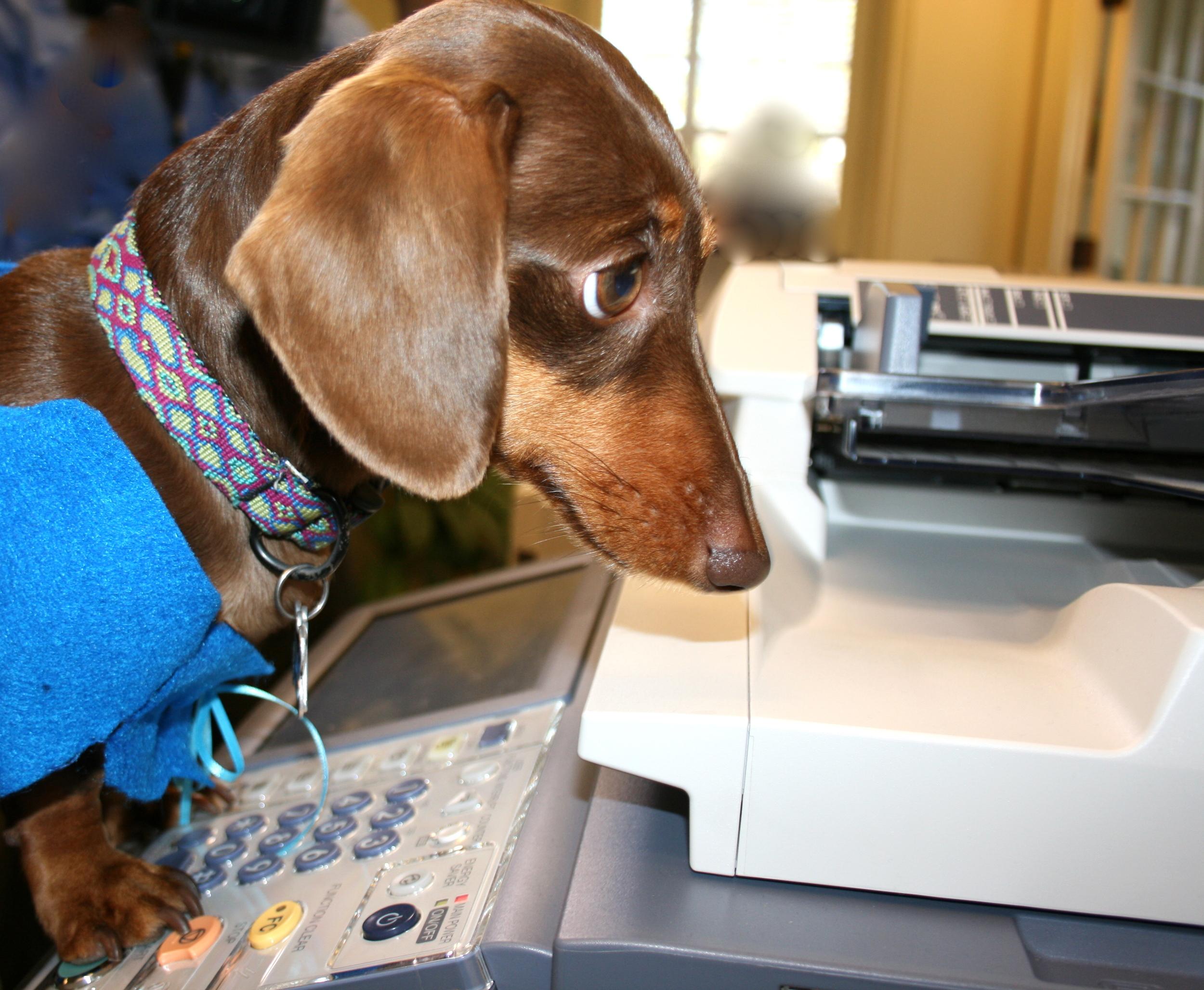 Stella making copies.