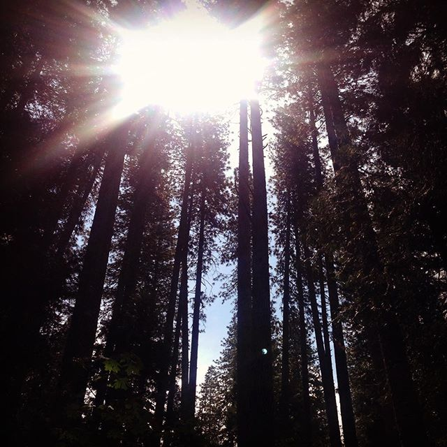 Taken by me :) #trees #getoutside #yosemitenationalpark
