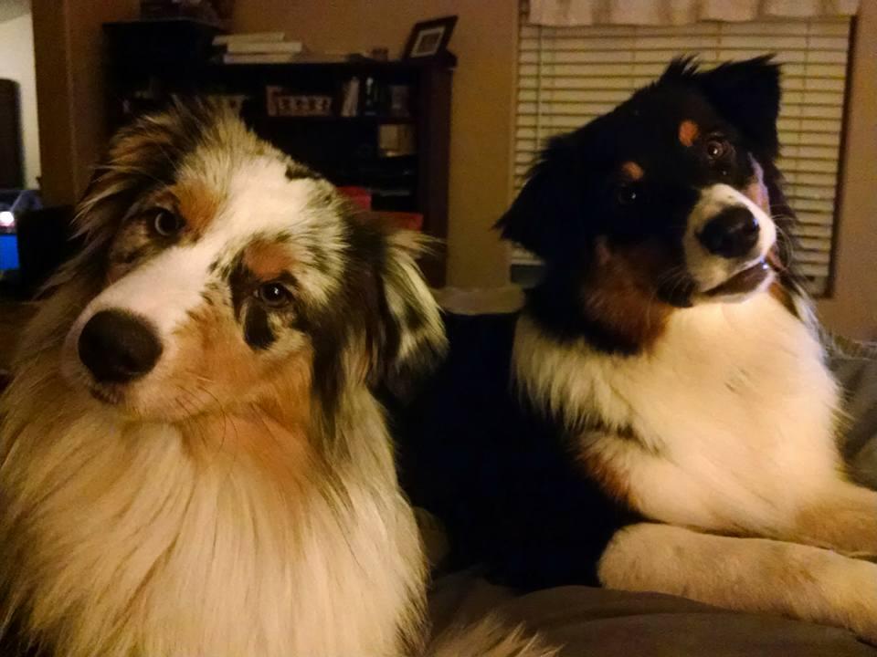 Sitka & Juneau looking cute