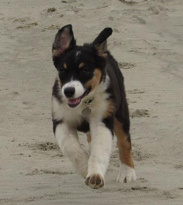 Juneau on the beach