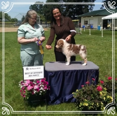 Nanooks second show received a Best Opposite Sex Puppy (Puppy Sweeps) at the Memorial Day 2016 show at 10 weeks old.