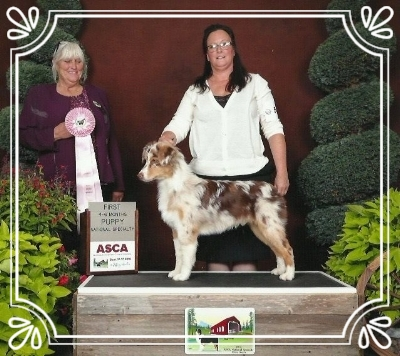 Took his class at national under Sr. Breeder Judge Sue Holt.