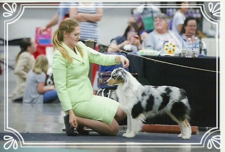 Sitka made her cut at nationals of 28 dogs