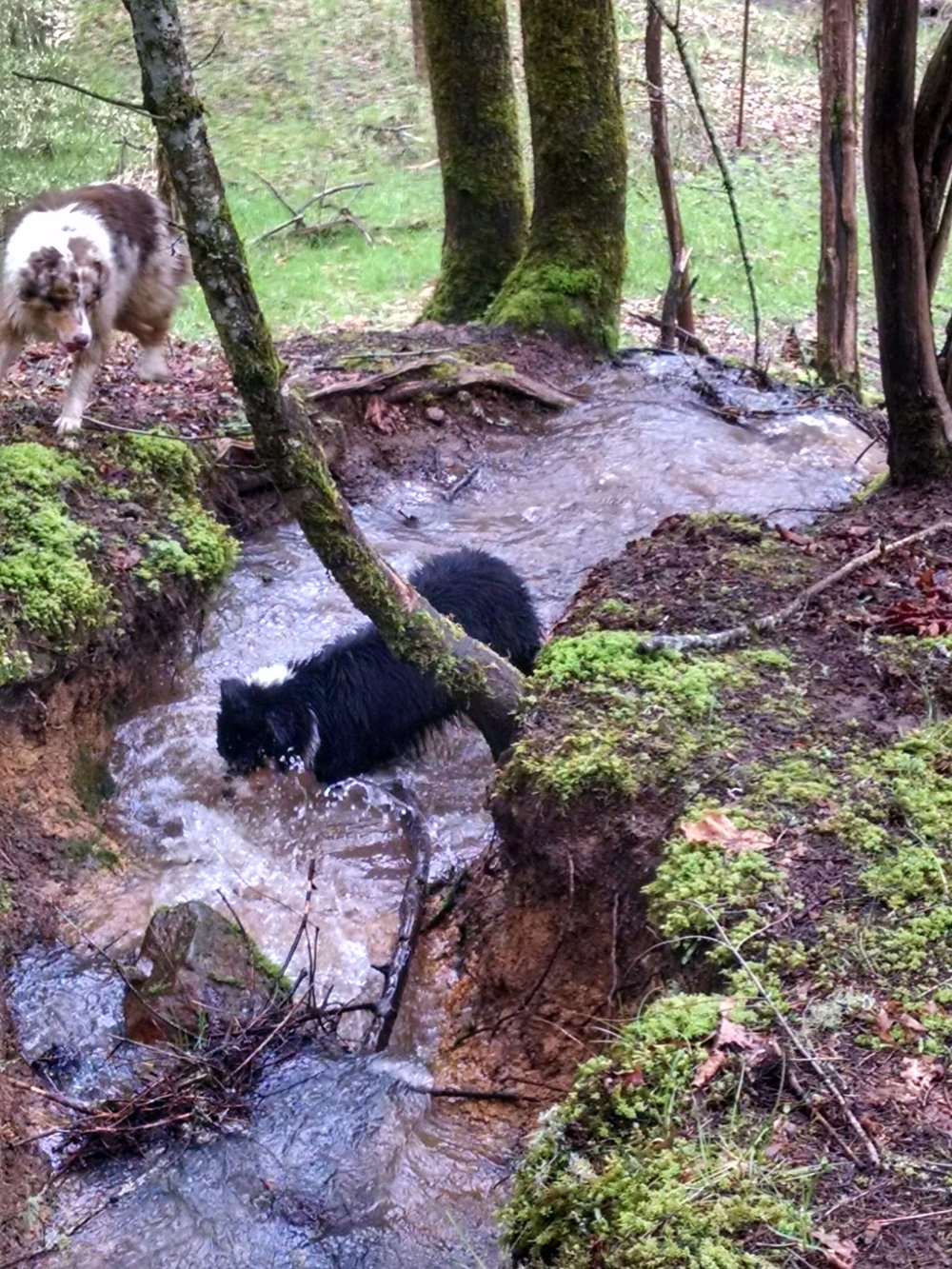 Creek play day for Juneau