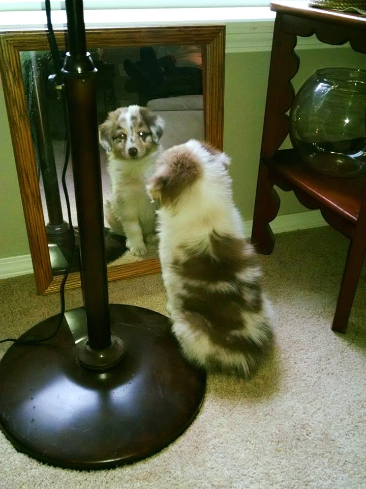 Who is that puppy in the mirror?