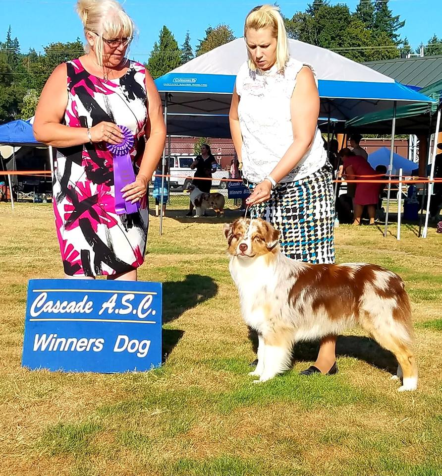 Winners Dog - 5 pt Major - Cascade ASCJuly 2018