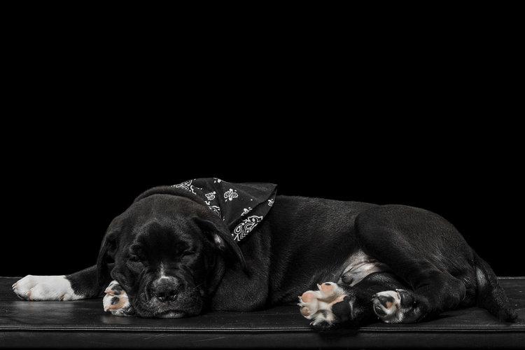 bulldog-sleeping.jpg
