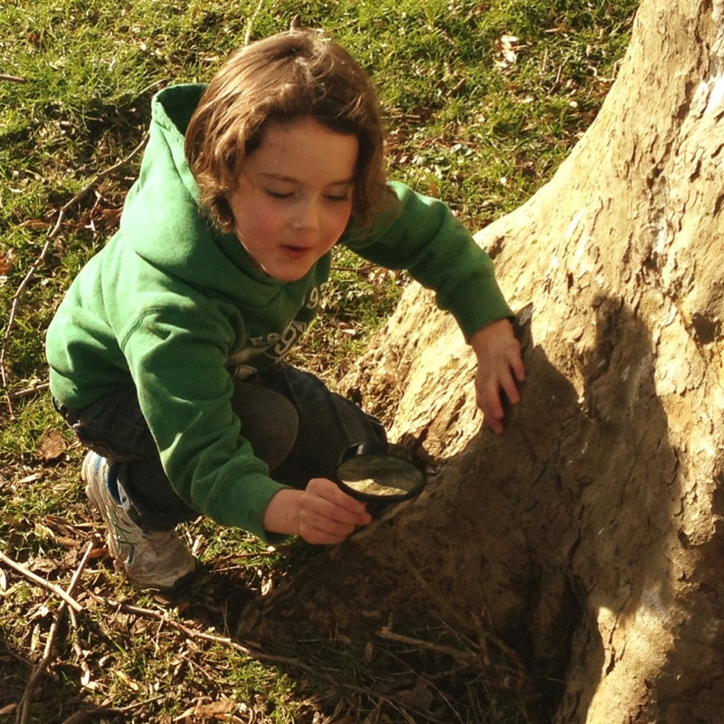Go Wild Forest School bug hunt.jpg