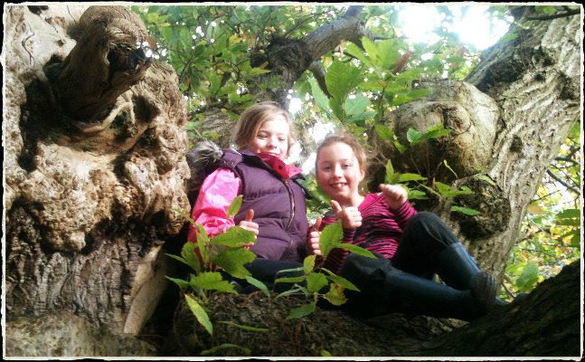 Go Wild Forest School girls up a tree.jpg