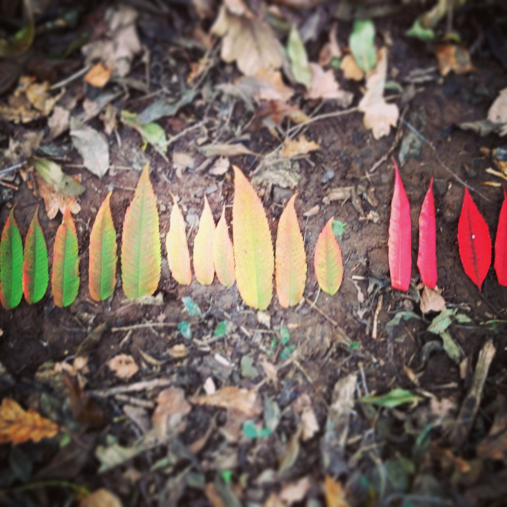 Go Wild Forest School colour graded leaves.JPG