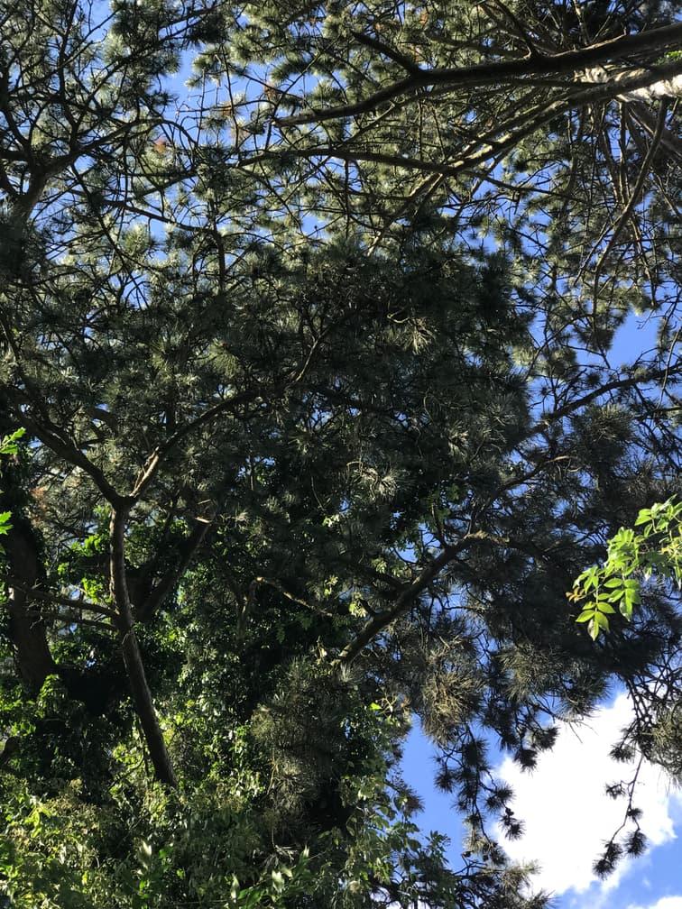 19. Coniferous Woodland