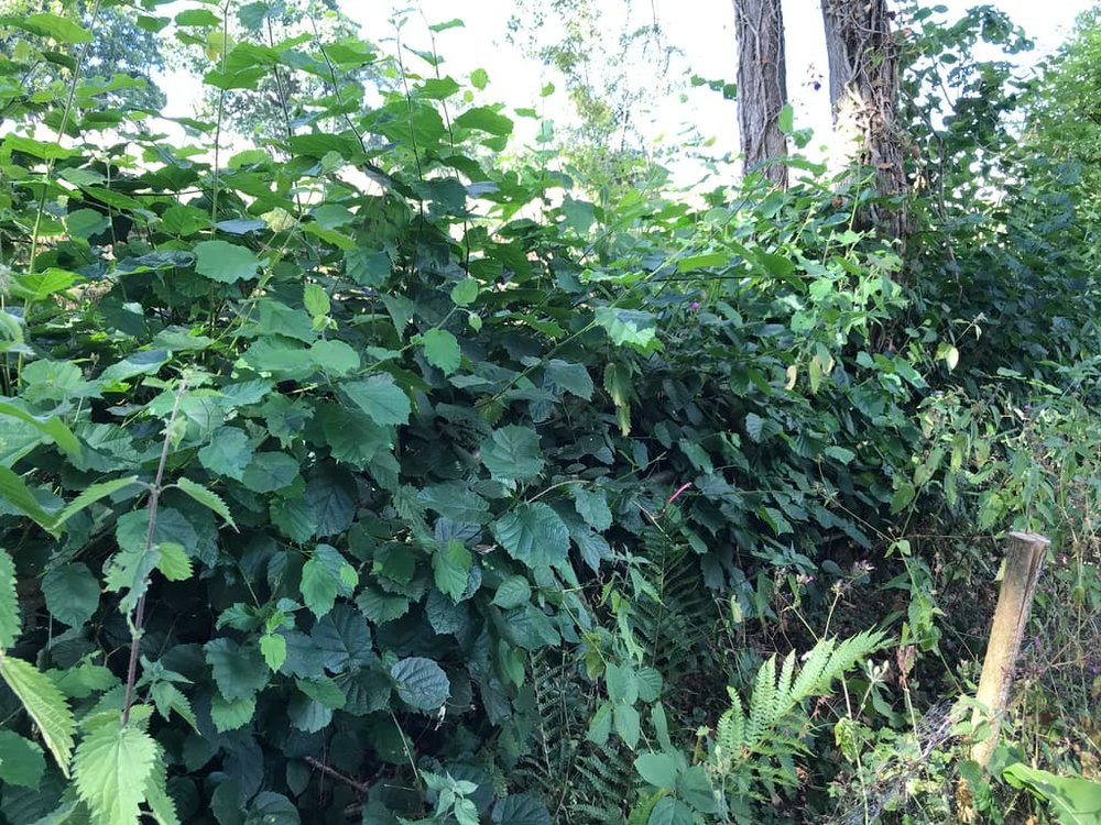 17. Hedgerows