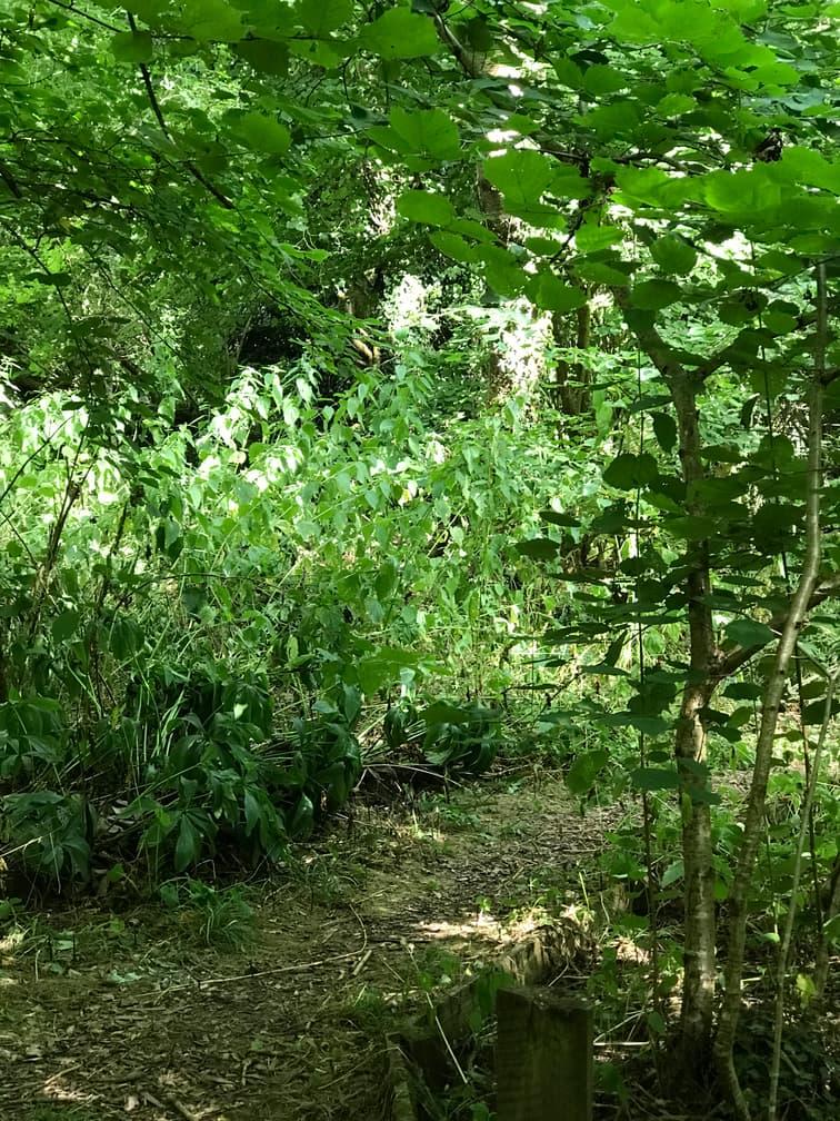 15. Broadleaved Woodland