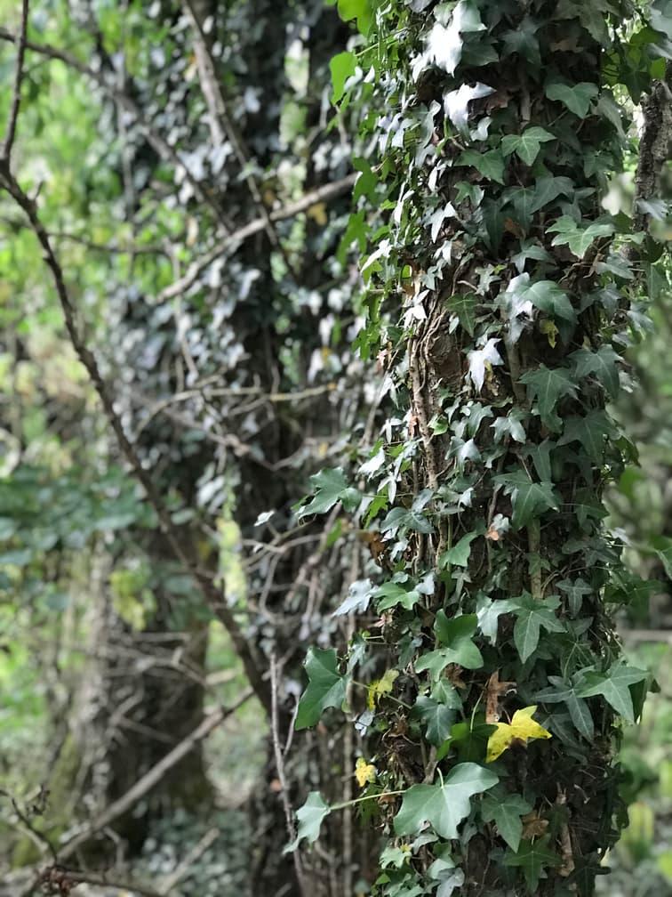 7. Climbing Plants & Epiphytes.jpg