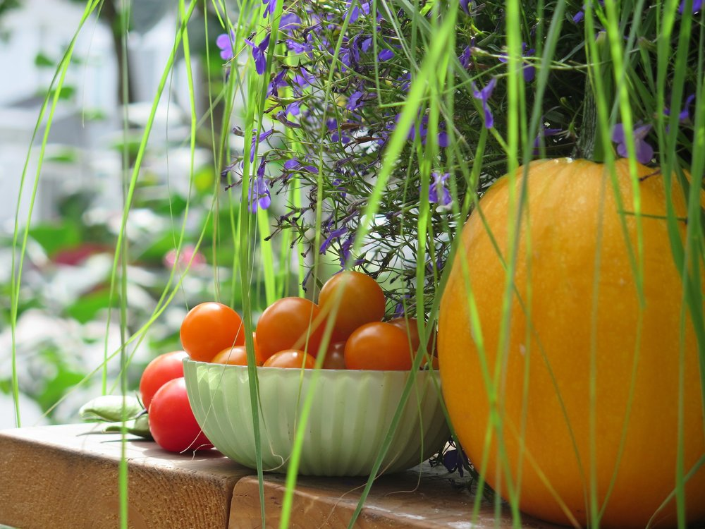 courgette, sungold and stupice tomatoes and sweet peas in the pod from your garden will taste as good as they look!
